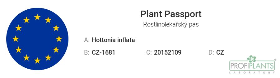 Rostlinolékařský pas - Hottonia inflata - in vitro – kelímek Ø 6,5 cm