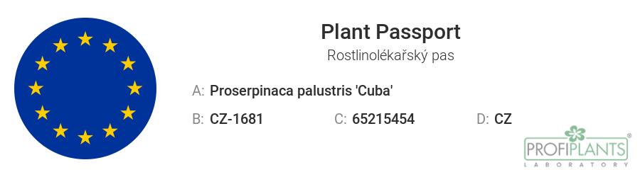 Rostlinolékařský pas - Proserpinaca palustris 'Cuba' - in vitro – kelímek Ø 6,5 cm
